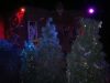 xmas 2011 christmas trees